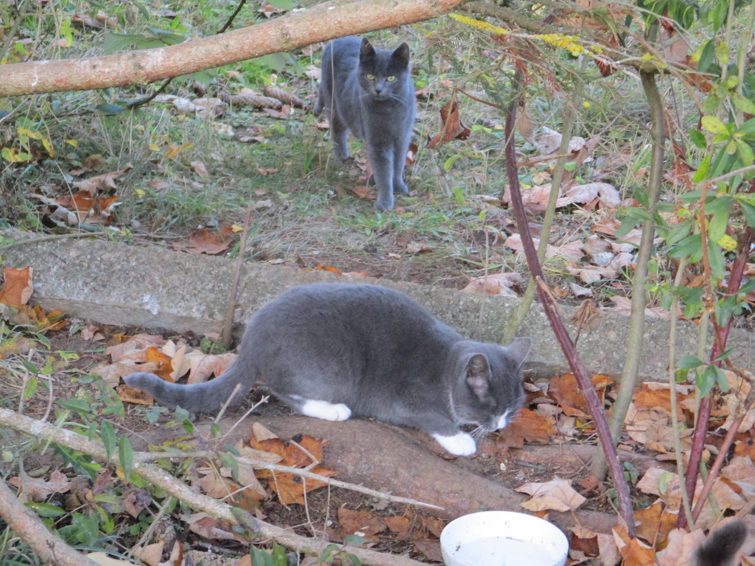 Katzen Quartett