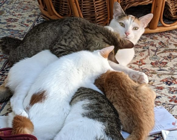Bella und ihre Rasselbande