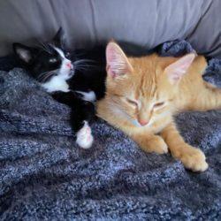 Nico und Charly