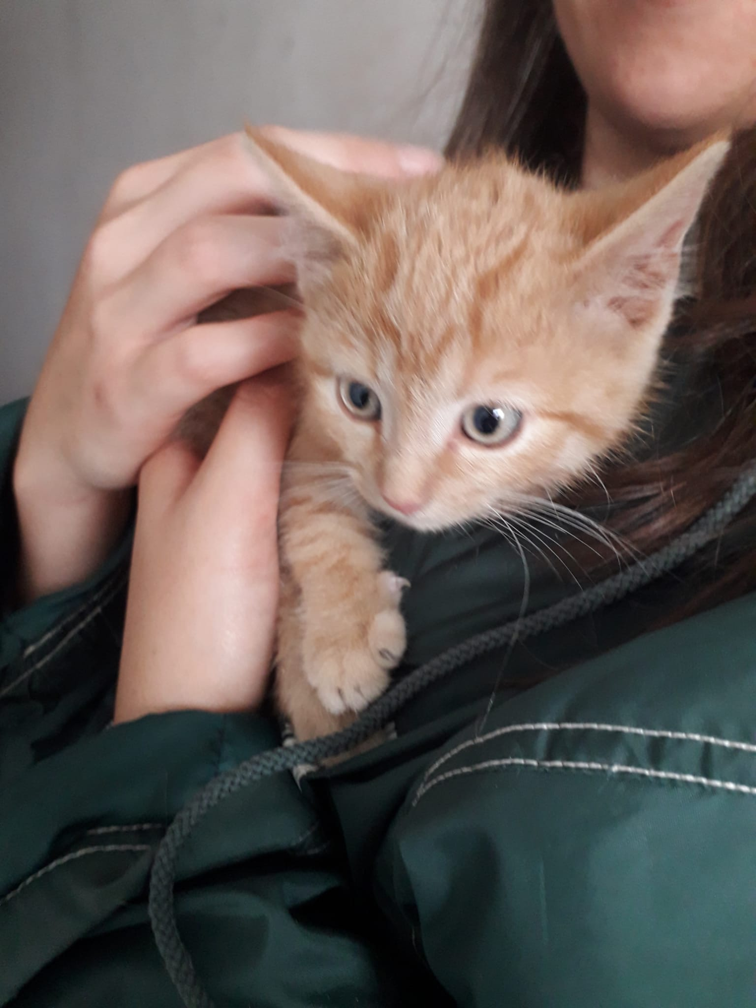 Kittenbande