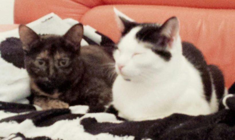 Kiki und Mila